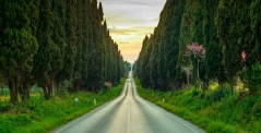 Bolgheri famous cypresses trees straight boulevard landscape, Italy
