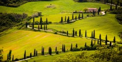 Curve road with cypress trees in val D'Orcia, Italy